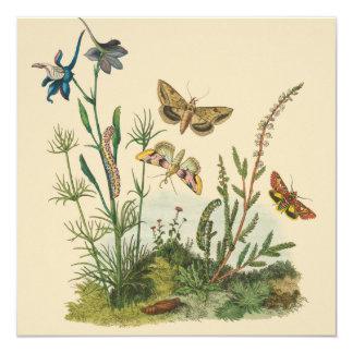 Vintage Garden Insects, Butterflies, Caterpillars Card