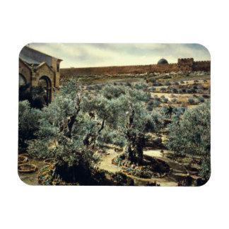 Vintage Garden of Gethsemane Jerusalem Israel Magnet