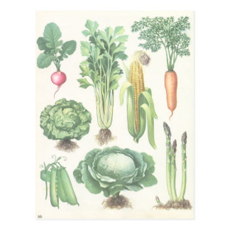 Vintage Garden Vegetables Postcard