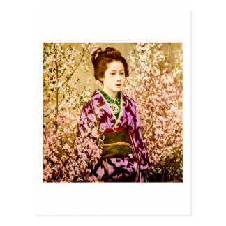 Vintage Geisha Posing in Cherry Blossoms Postcard