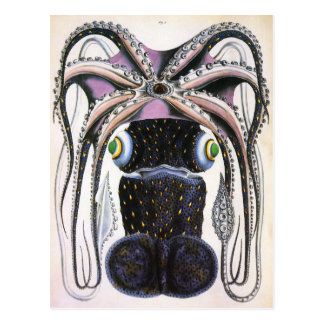 Vintage Giant Octopus or Squid, Marine Life Animal Postcard