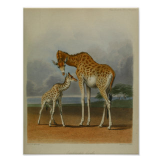 Vintage Giraffe with Calf Print African Savanna