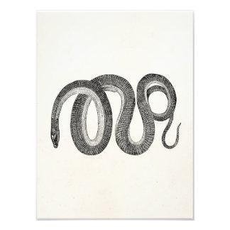 Vintage Glass Snake - Reptile Template Blank Photo Print