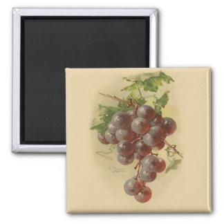 Vintage grapes square magnet