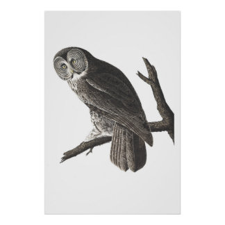 Vintage Great Cinerous Owl illustration print