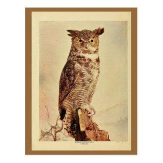 Vintage great horned owl colour litho photo postcard