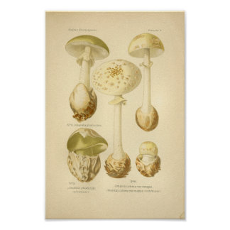 Vintage Green Mushrooms Art Print French