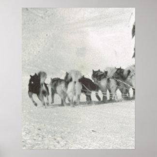 Vintage Greenland, arctic Dog team at work Poster
