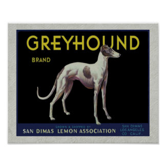 Vintage Greyhound Lemon Label Circa 1920 Poster