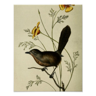 Vintage Ground Wren Poster