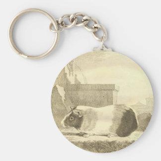 Vintage Guinea Pig Basic Round Button Key Ring