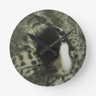 Vintage guinea pig photograph wall clocks