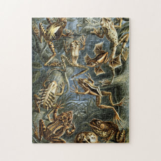 Vintage Haeckel Frogs and Toads Puzzle