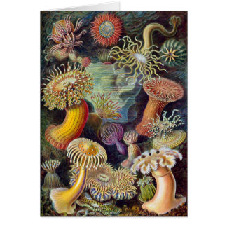 Vintage Haeckel Sea Anemone Card