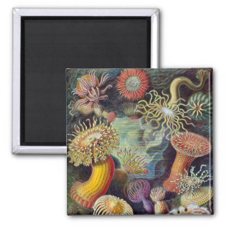 Vintage Haeckel Sea Anemone Magnet