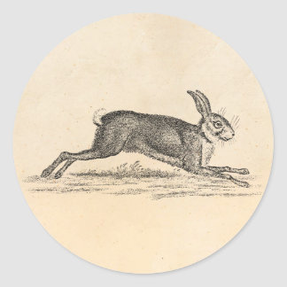 Vintage Hare Bunny Rabbit 1800s Illustration Round Sticker