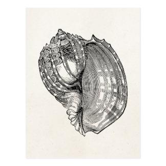 Vintage Harp Seashell Antique Shells Template Postcard