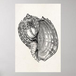 Vintage Harp Seashell Antique Shells Template Poster