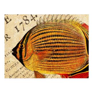 Vintage Hawaiian Butterfly Fish Customized Antique Postcard