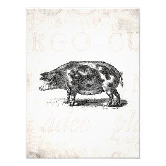 Vintage Hog Illustration on Old Paper 1800s Pig Photograph