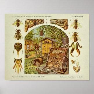 Vintage Honey Bee Anatomy Beekeeper Art Print