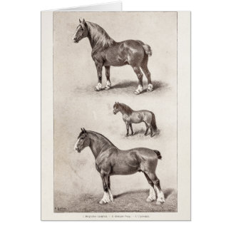 Vintage Horse Clydesdale Shetland Belgian Horses Card