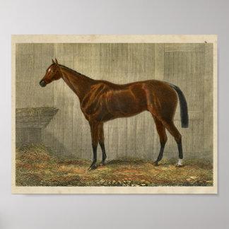 Vintage Horse Print 1873 Blue Cown