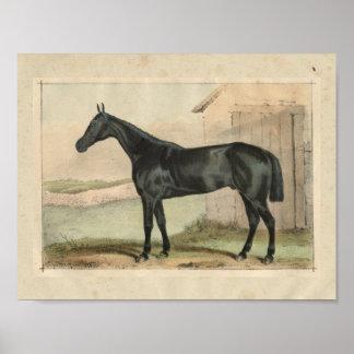 Vintage Horse Print 1873 Glengarry