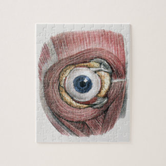 Vintage Human Anatomy, Eyeball Eye with Muscles Jigsaw Puzzle