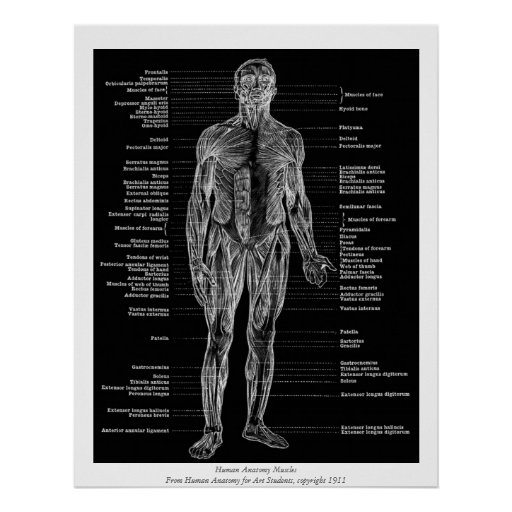 Vintage - Human Anatomy Muscles Front View Black Poster
