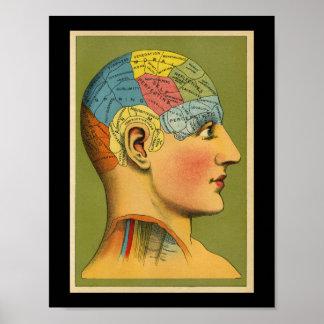 Vintage Human Phrenology Print