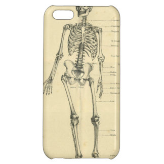 Vintage Human Skeleton 1887 Cover For iPhone 5C