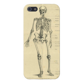 Vintage Human Skeleton 1887 Cover For iPhone 5