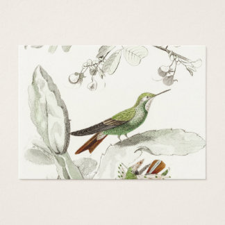 Vintage Hummingbird Illustration - 1800's Birds Business Card