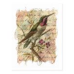 Vintage Hummingbird Postcard