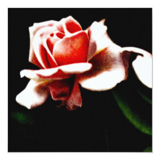 Vintage Hybrid Tea Rose Photo 13 Cm X 13 Cm Square Invitation Card