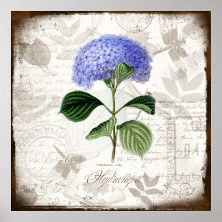 Vintage Hydrangea Poster