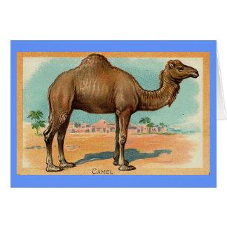 Vintage Illustration - Dromedary Camel Card