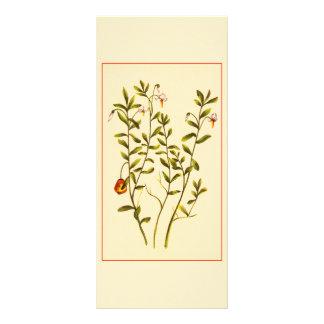 Vintage Illustration of a Cranberry Plant Rack Card