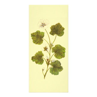 Vintage Illustration of a Round Leaved Mallow Customized Rack Card