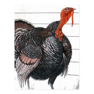 Vintage illustration of a Thanksgiving Turkey Postcard