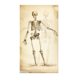 Vintage Illustration of Human Skeleton Canvas Print