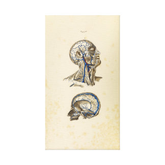 Vintage Illustration of Human Veins Canvas Print