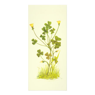 Vintage Illustration of the Yellow Wood-Sorrel Rack Card Template