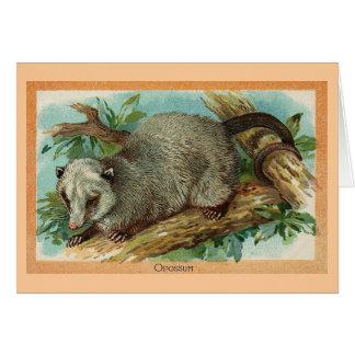 Vintage Illustration - Opossum Card