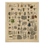Vintage Insect Diagram Posters