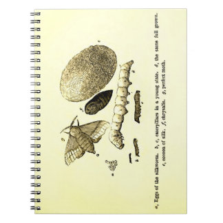 Vintage Insect Image | Silkworm | Moth Notebooks