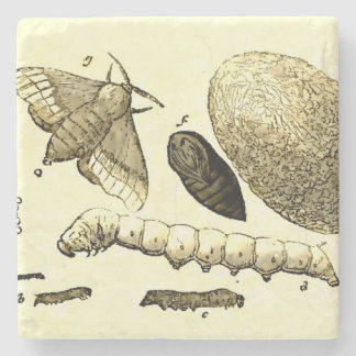 Vintage Insect Image | Silkworm | Moth Stone Coaster