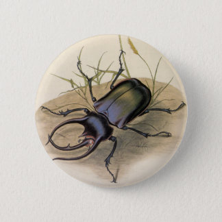 Vintage Insects and Bugs, Rhino Rhinoceros Beetle 6 Cm Round Badge