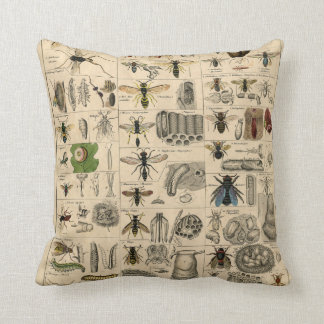 Vintage Insects Entomology Taxonomy Polyester Cushion